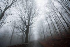 老保守森林道路 免版税库存图片