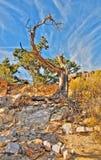 老停止的结构树 免版税库存图片
