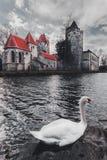 老公园和城堡波滕多夫在有一只白色天鹅的奥地利 免版税图库摄影