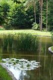 老公园池塘 免版税图库摄影