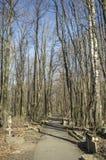 老公墓和路通过树 库存图片