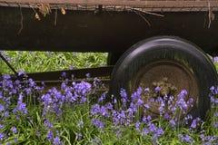 老农业机械在充满活力的会开蓝色钟形花的草森林里 免版税图库摄影