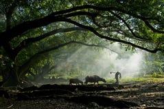 老农夫在古老榕树下 免版税图库摄影