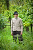 老农夫在他的果树园 免版税库存照片