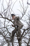 老农夫饰物树在他的果树园 免版税库存照片