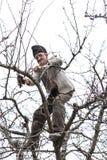 老农夫饰物树在他的果树园 免版税库存图片