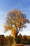 老农村风景和秋天颜色 免版税图库摄影