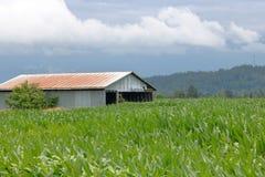老农舍和玉米田 免版税库存图片