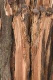 老分裂腐烂的木纹理背景 图库摄影