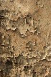 老削皮墙壁 免版税库存图片