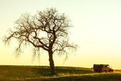 老卡车和橡木在日落 库存图片