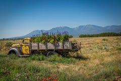 老卡车在一个用花装饰的草甸 库存照片