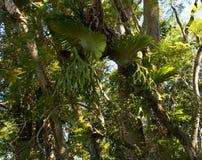老厕所澳大利亚人森林 库存照片