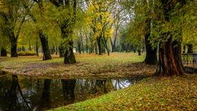 老厚实的树,在一条小河的银行的下落的叶子在一个美丽的秋天城市公园 免版税图库摄影