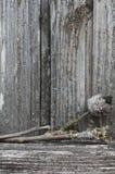 老发霉和地衣报道了苹果树分支 图库摄影