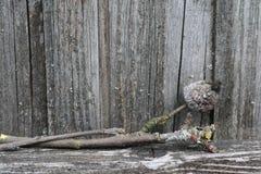 老发霉和地衣报道了苹果树分支 库存照片