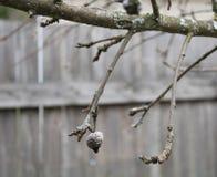 老发霉和地衣报道了苹果树分支 免版税库存图片
