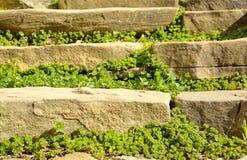 老台阶和周围的植被 图库摄影