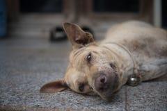 老和丑恶的狗微笑 图库摄影