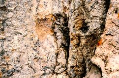 老和干燥木吠声表面背景 免版税库存图片