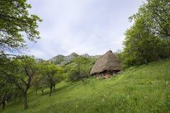 老土气房子在一个绿色果树园 库存图片