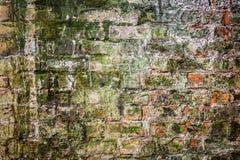 老在工厂厂房的油漆生苔砖墙 免版税库存图片