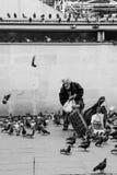 老在黑白的人哺养的鸽子,巴黎 免版税库存图片