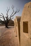 老墙壁和大树在Mahargarh堡垒 免版税库存图片