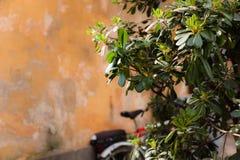 老墙壁和绿色灌木 库存照片