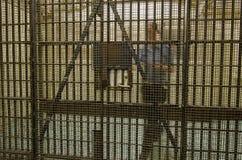 老墨尔本监狱 免版税图库摄影