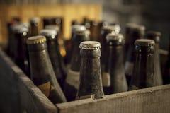 老多灰尘的瓶啤酒 免版税库存图片
