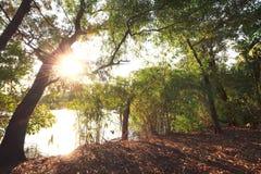 老大树和日落在公园 免版税图库摄影