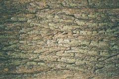 老大树皮纹理在深森林里 库存照片