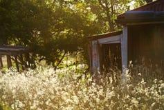 老奔跑下来放弃了空的房子长满的长的草和杂草 免版税库存照片