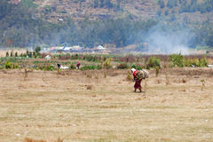 老女性农厂工作者运载木柴 免版税库存图片