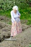 老妇人在一个开花的庭院里工作 免版税库存图片