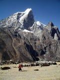 老妇人在喜马拉雅山 免版税库存图片