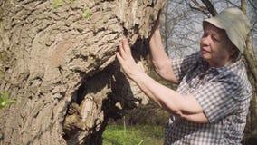 老妇人抚摸一棵大树和谈话与它 影视素材