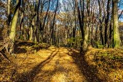 老宽河道在有道路的深森林里在边界,在秋天,斯洛伐克11月,布拉索夫, 库存照片
