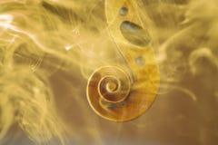 老小提琴头投降了与彩色烟幕和火焰 免版税库存图片