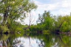 老小池塘 免版税库存图片