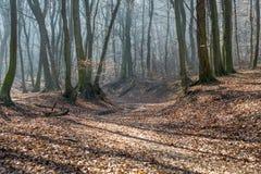 老小河低谷在森林里在与雾、太阳射线和长的树阴影的2月下旬冬天 图库摄影