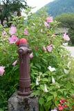 老布朗和红火消防栓 免版税图库摄影