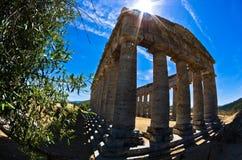 老希腊寺庙和橄榄树在Segesta,西西里岛 图库摄影