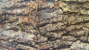 老干燥木片断背景 图库摄影