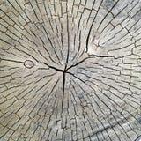 老干燥木头 免版税库存图片