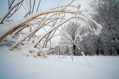 老干燥灌木在一冷淡的天 库存图片