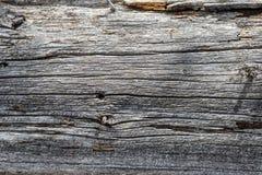 老干燥灰色木背景的纹理 免版税库存图片
