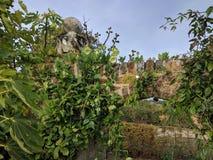 老庭院曲拱 免版税库存照片