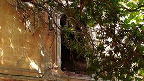 老房子 一棵大树在一个被毁坏的和被放弃的房子附近增长 股票录像